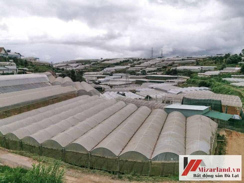 bán đất nông nghiệp phường 5