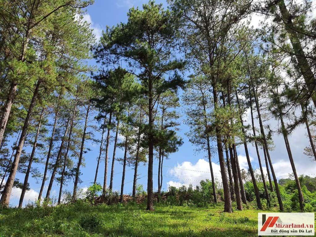 Bán Lô Đất Ở Xã Tà Nung
