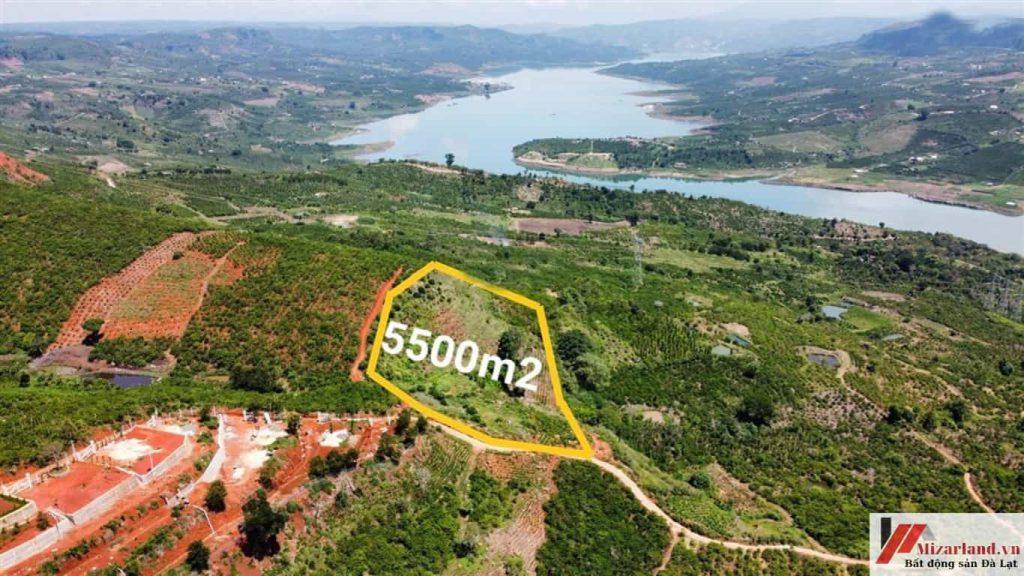 Bán 5500 M2 Đất Lâm Đồng