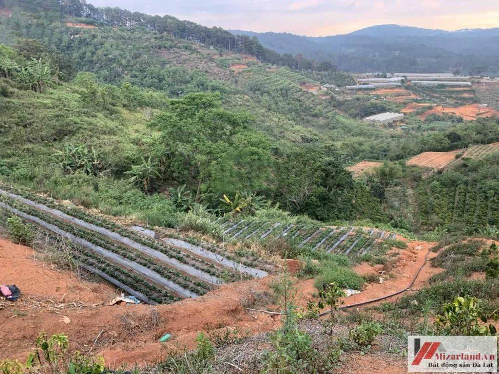 Bán đất nông nghiệp tại đèo Mimosa