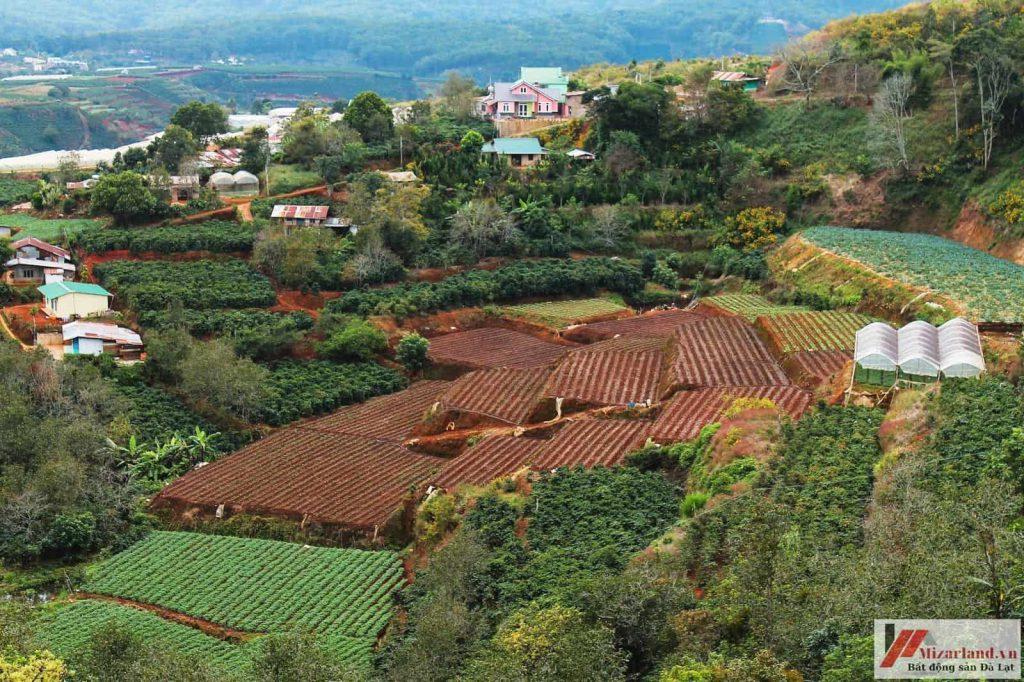Bán đất nông nghiệp view đồi thông tuyệt đẹp ngoại ô Đà Lạt