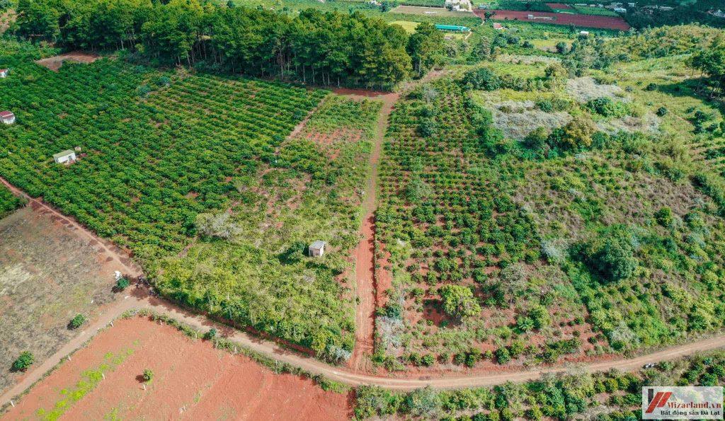 Bất động sản nông nghiệp Đà Lạt bán