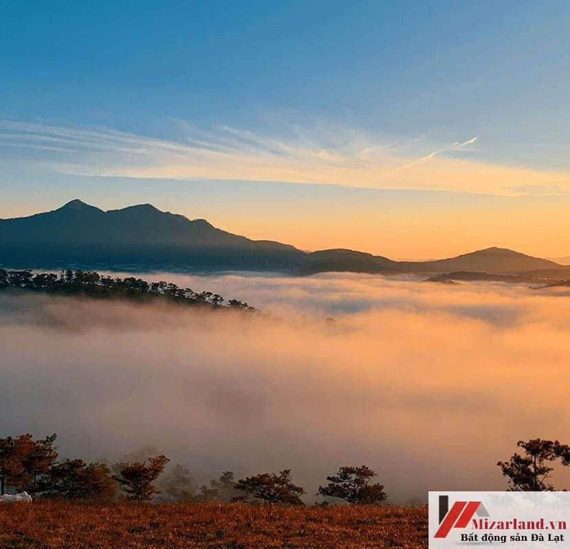 Đất View Rừng Thông Và Săn Mây Cực Đẹp Đạ Sar