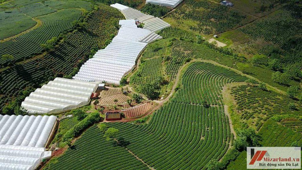 Đất nông nghiệp Đà Lạt