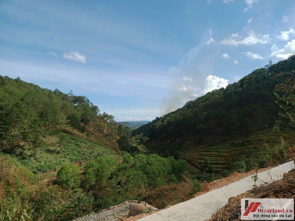 Đất nông nghiệp view rừng thông Đà Lạt